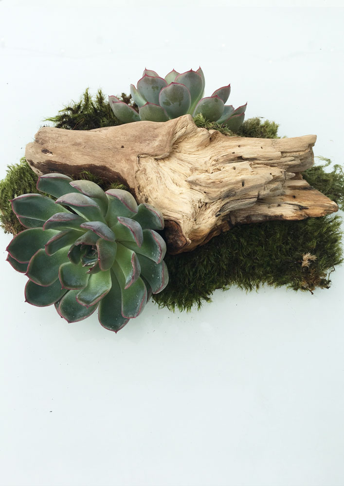 succulent_decoration_green_design_food&event
