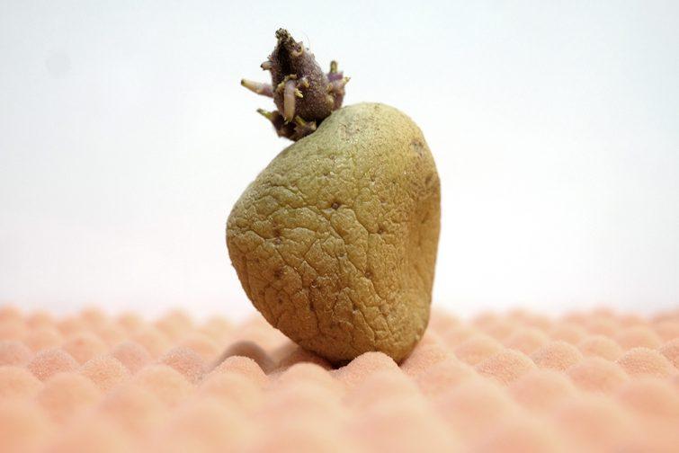 different-beauty-food-concept-potato-foodandevent