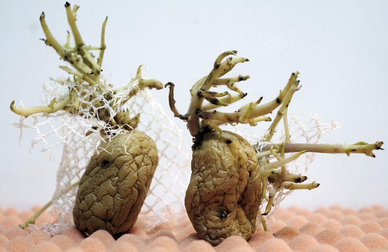 different-beauty-food-concept-potatos-patatas-foodandevent